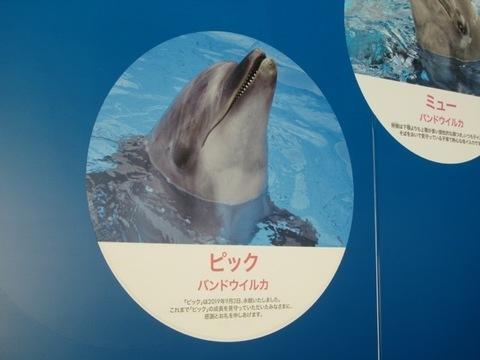 えのすい - 2.jpg