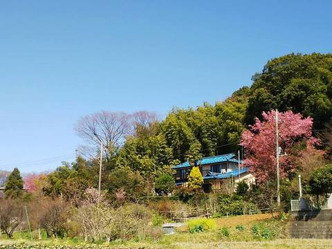 お散歩4.jpg
